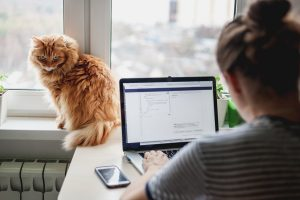 Ginger cat sat on a window sill watches a lady working on a laptop computer